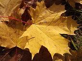Autumn yellow leaves pattern