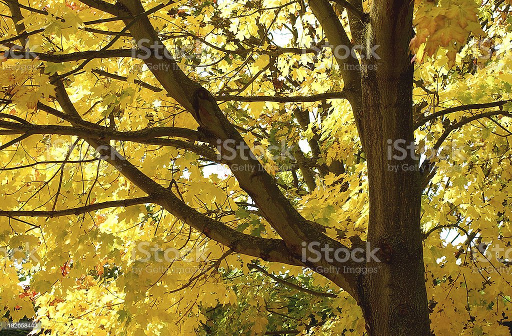 Autumn Yellow royalty-free stock photo