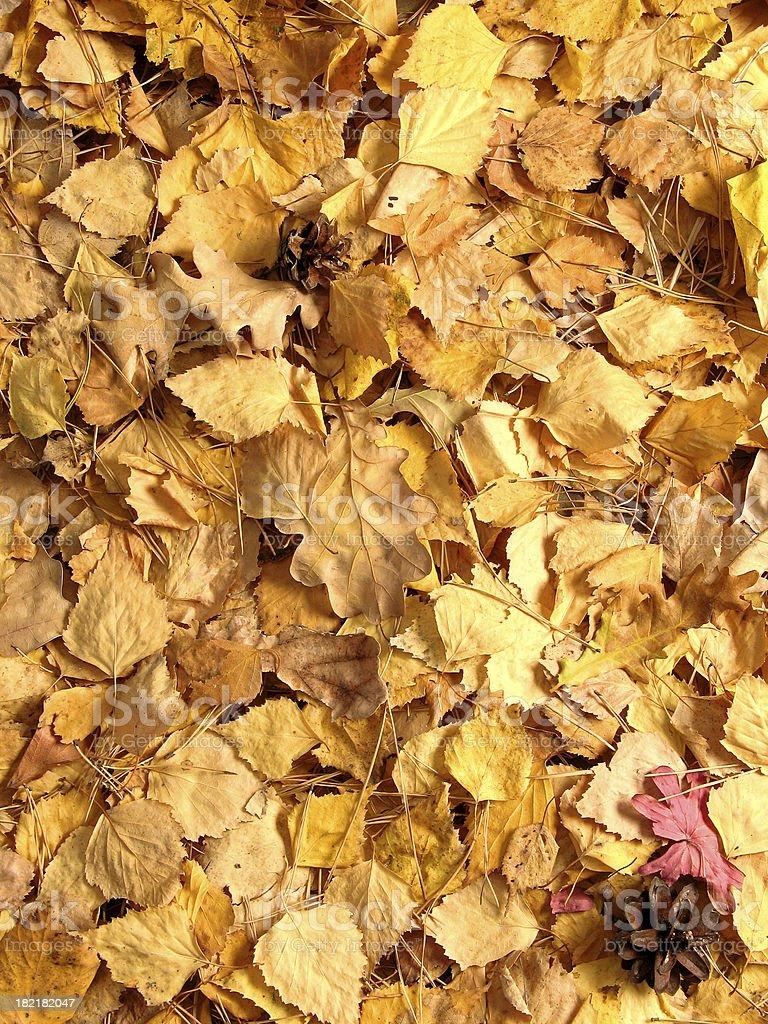 Autumnal Background royalty-free stock photo