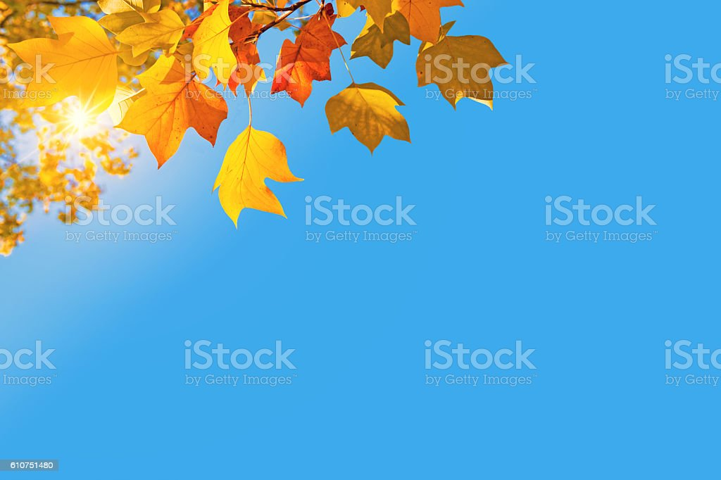 Autumnal background, sun, yellow leaves and blue sky stock photo