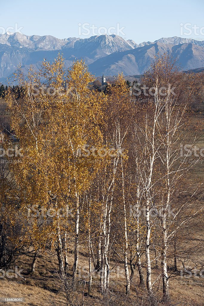Autumnal Birches Hiding Church and Slovenian Alps royalty-free stock photo