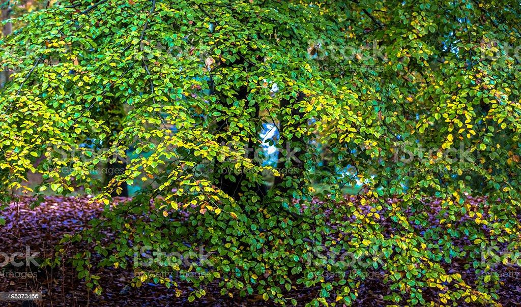Autumnal canopy stock photo