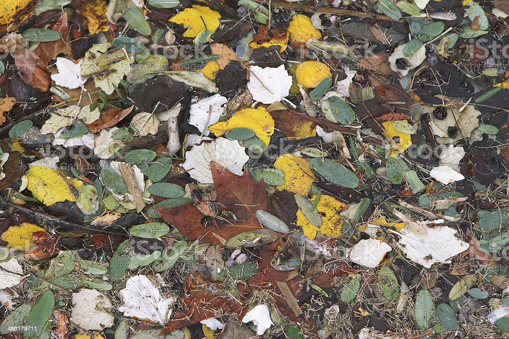Autumnal colored leaves royalty-free stock photo