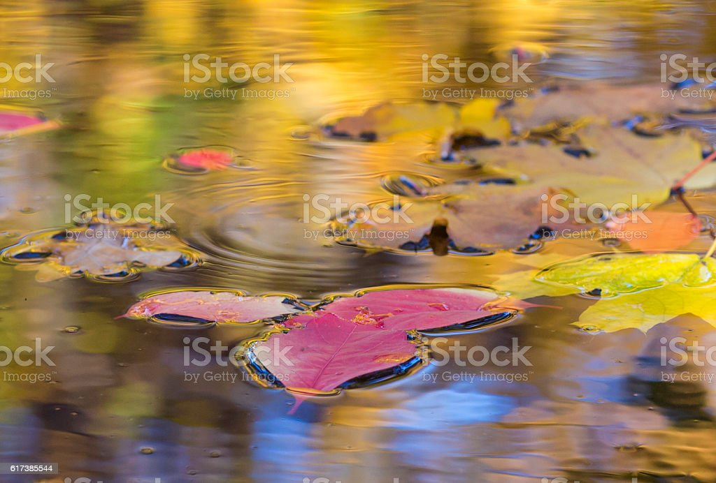 Autumnal Composition with fallen leaves in the puddle stock photo