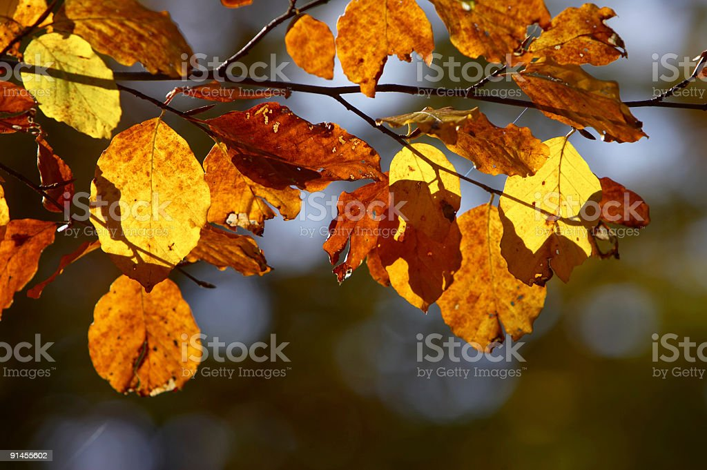 Autumnal Decay royalty-free stock photo