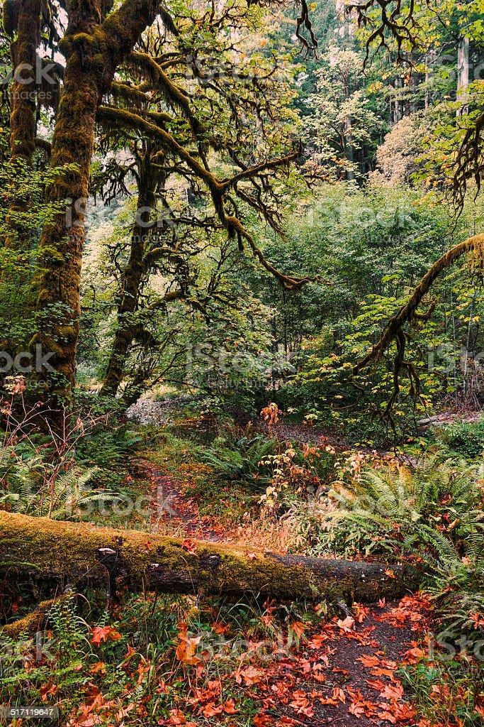 Autumnal Equinox stock photo