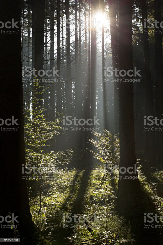 Autumnal forest in Southern Germany stock photo