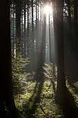 Autumnal forest in Southern Germany