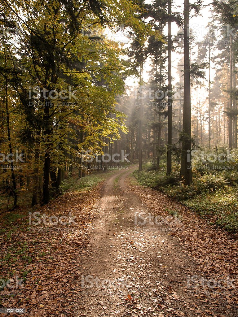Autumnal forest in the afternoon light royalty-free stock photo