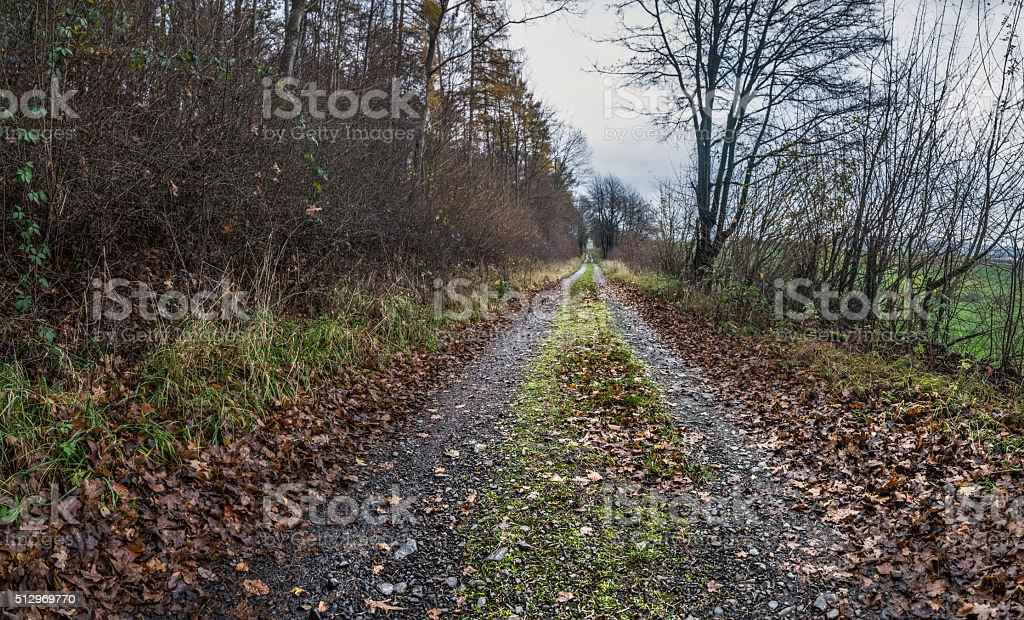 Herbstlicher Waldweg stock photo