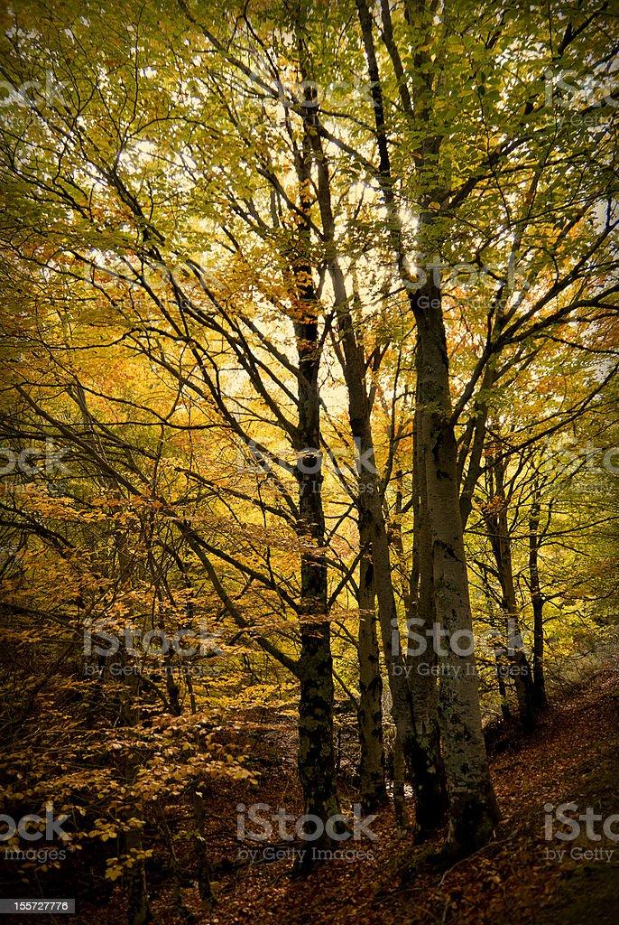 Autumnal bosque - foto de stock