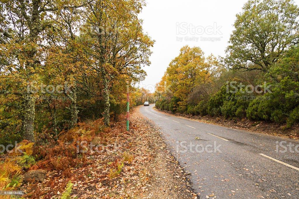 Autumnal Grove Road Between a Rainy Day - Carretera Otoño stock photo