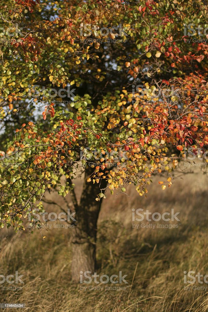 Autumnal Impression stock photo