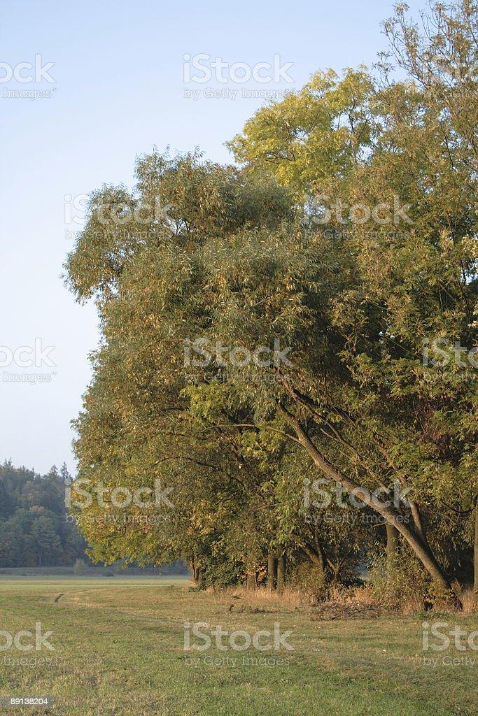 Autumnal landscape royalty-free stock photo