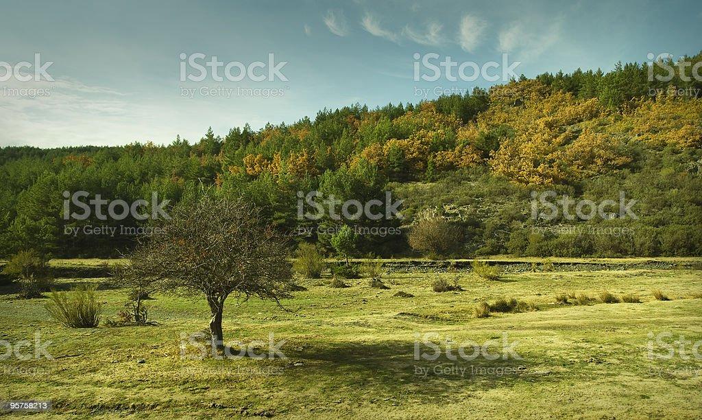 Autumnal paisaje - foto de stock