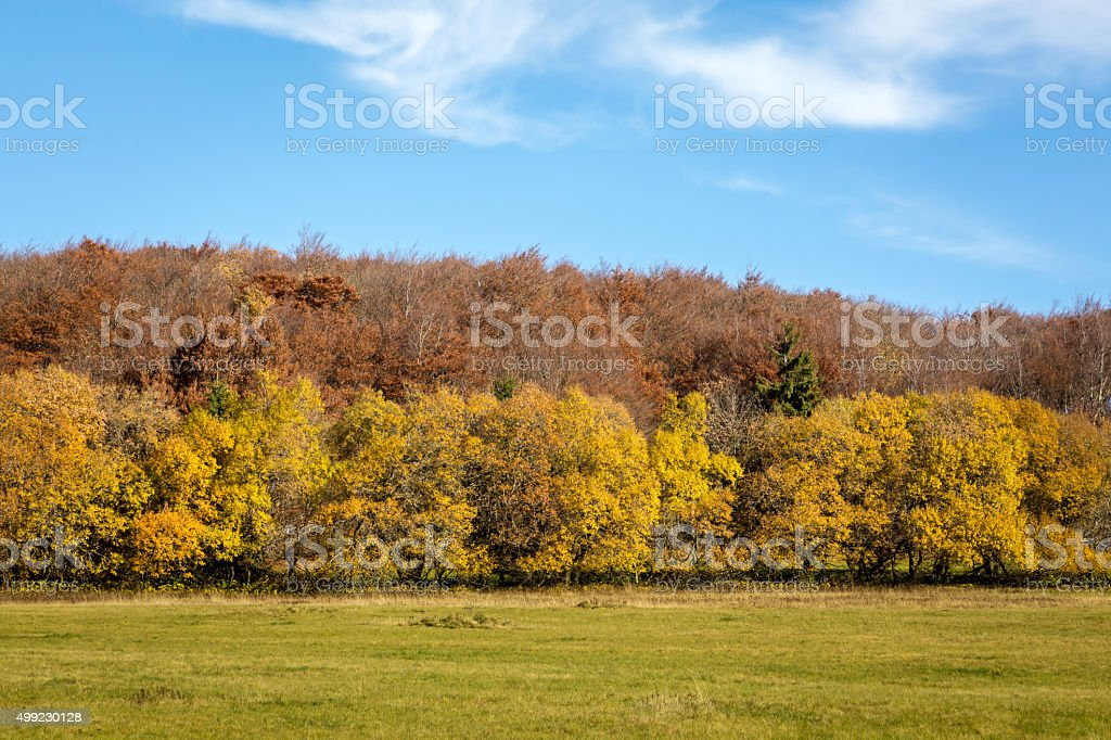 Autumnal Landscape with a meadow and a forest stock photo