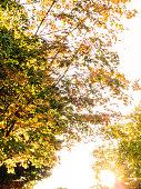 autumnal leaves at dusk