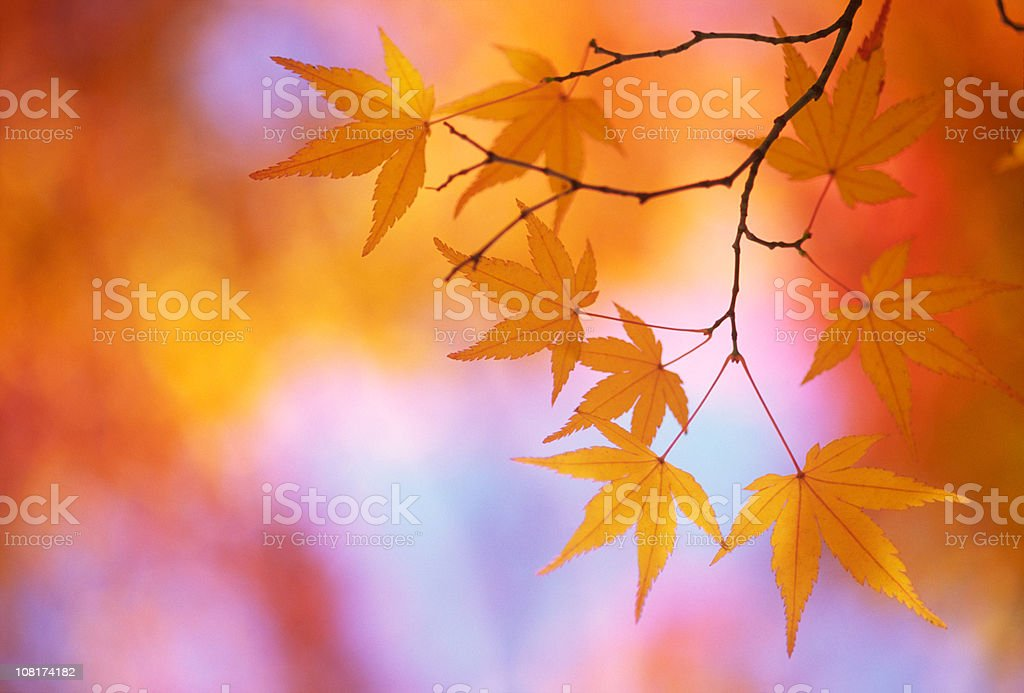 Autumnal leaves royalty-free stock photo