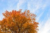 Autumnal leaves trees.