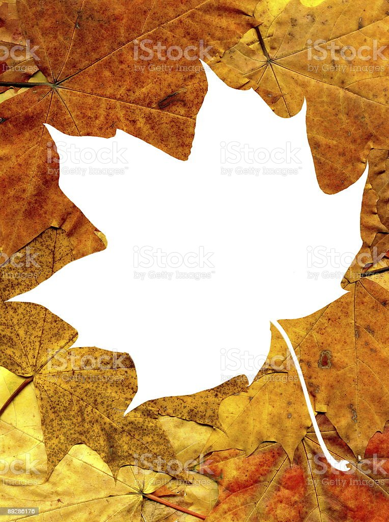 autumnal maple leaves background with frame royalty-free stock photo