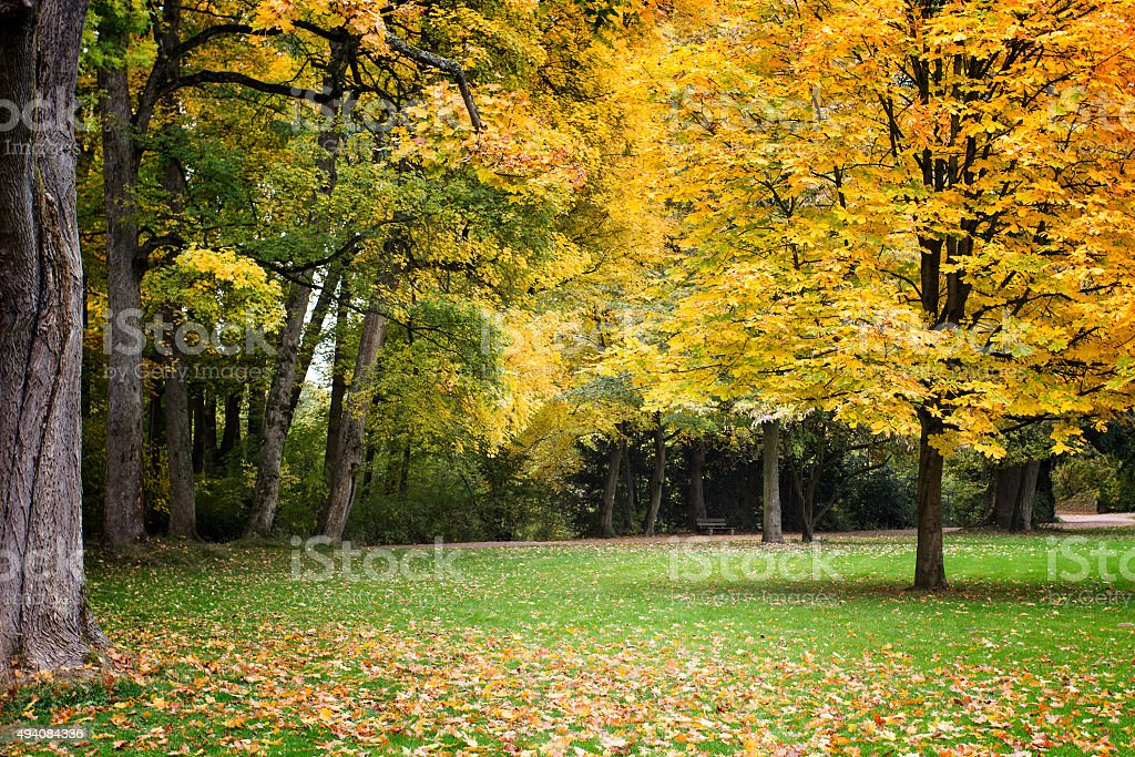 Autumnal park and trees stock photo