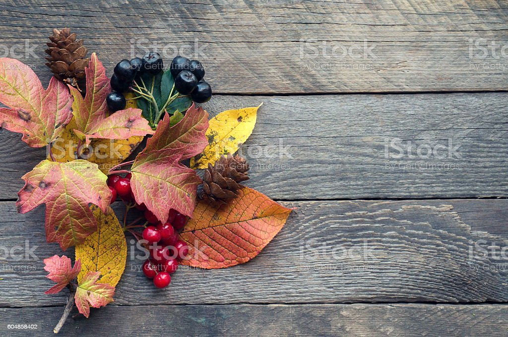 Autumnal plants and berries on wooden backdrop stock photo