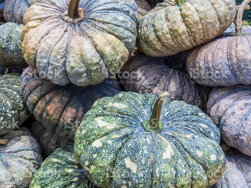 Autumnal pumpkins, harvest in Thailand royalty-free stock photo