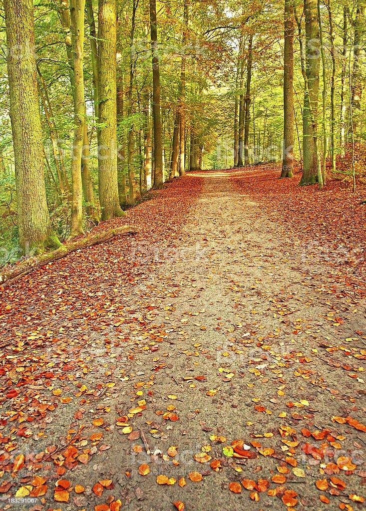 Autumnal scene royalty-free stock photo