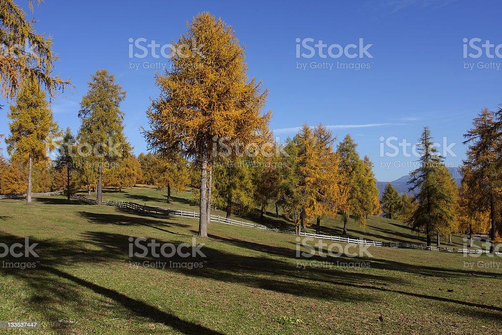 Autumnal scenery on Salten-Plateau stock photo