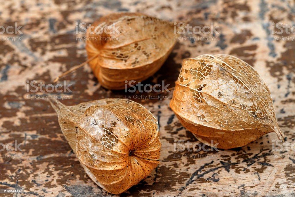 Autumnal Sepals of Physalis - Physalis alkekengi stock photo