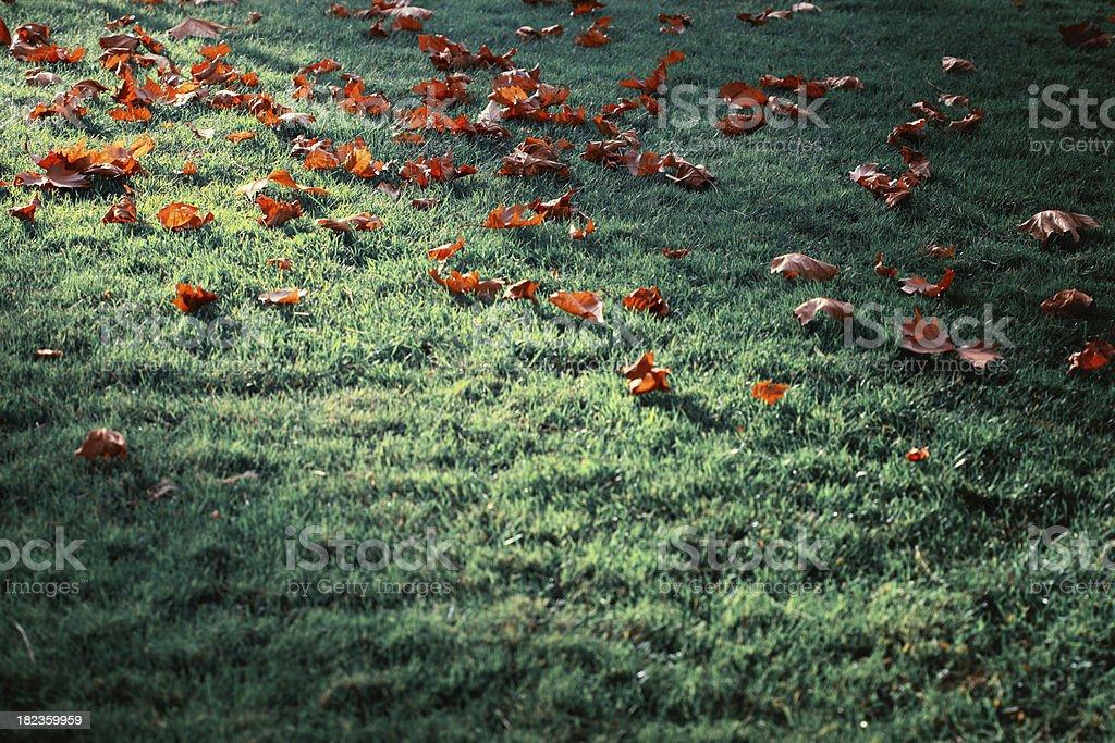 Autumnal Shine royalty-free stock photo