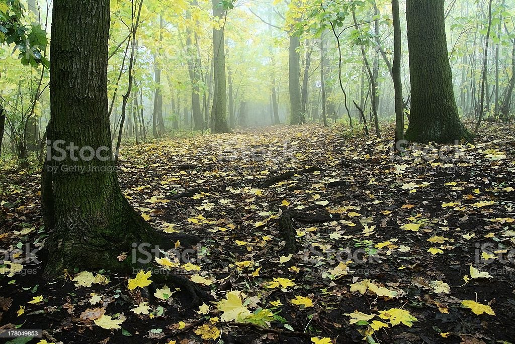 autumnal still life in deciduous temperate forest royalty-free stock photo
