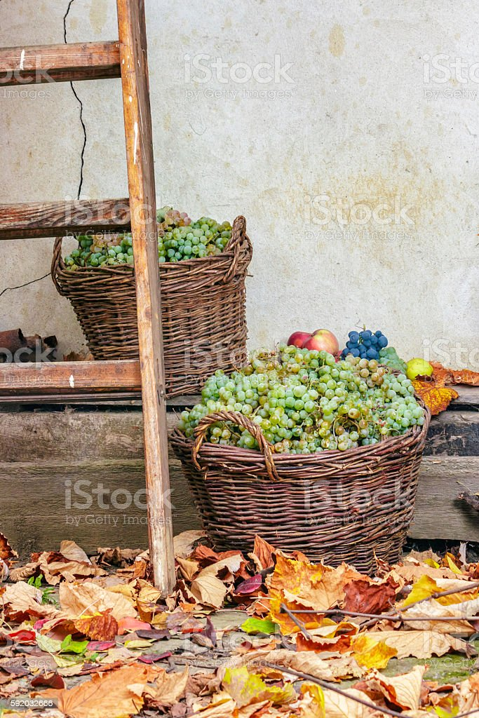 autumnal still life with fruit and leaves stock photo