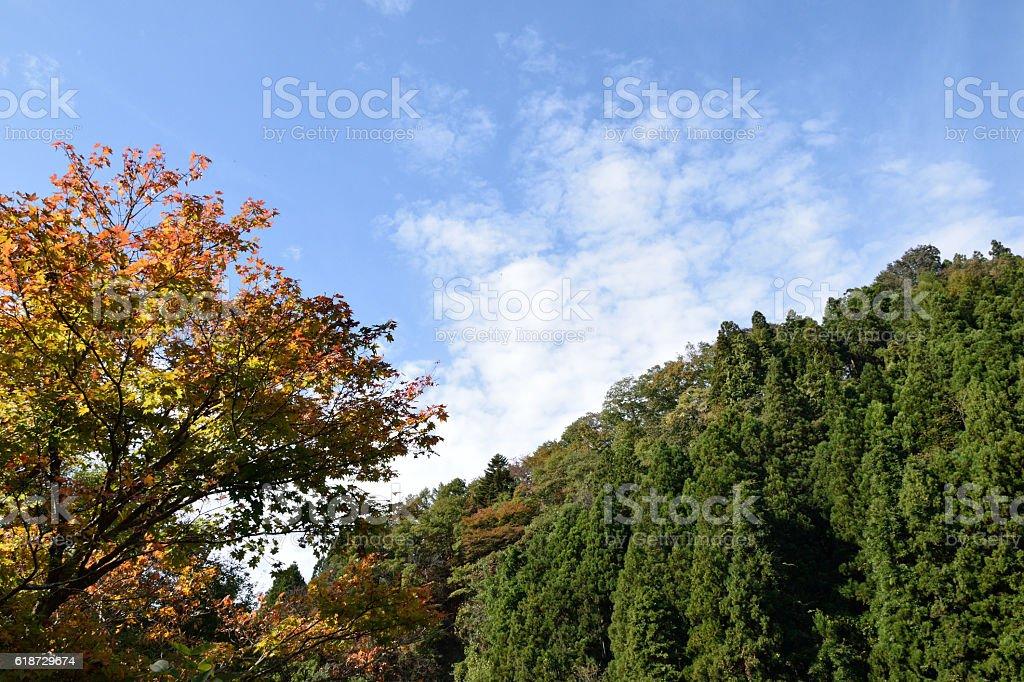 Autumnal tints. stock photo