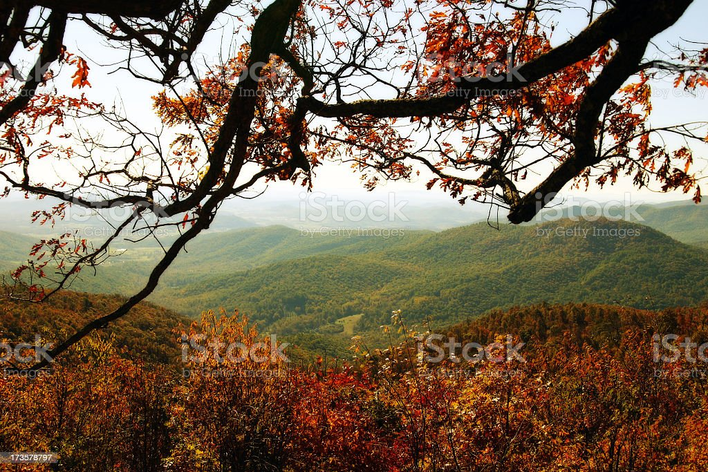 Autumnal tree branch against woods and hills stock photo