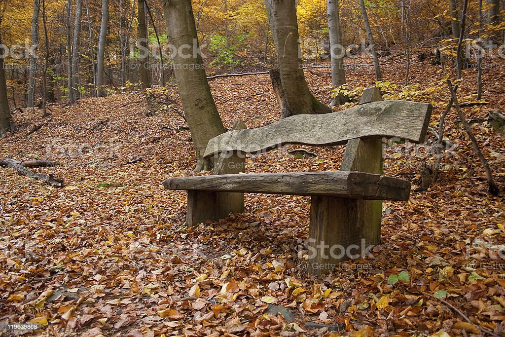 Autumnal trees and bench in a wood stock photo