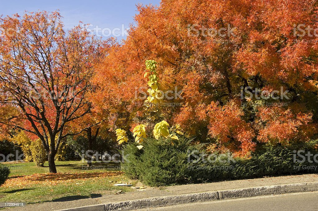 Autumnal trees complete with their leaves in Placerville stock photo