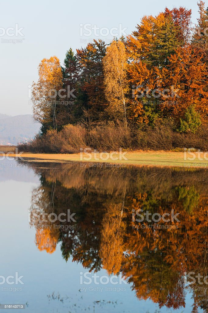 Autumnal Trees Reflection Lake Cerknica Slovenia stock photo