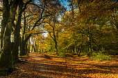 Autumnal vibrant colors in forest