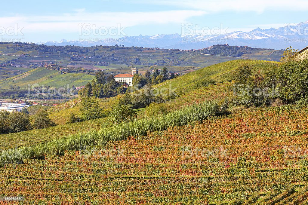 Autumnal view on vineyards in Piedmont, Italy. royalty-free stock photo