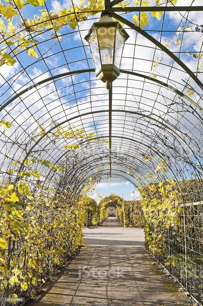 Autumnal vineyard arc royalty-free stock photo
