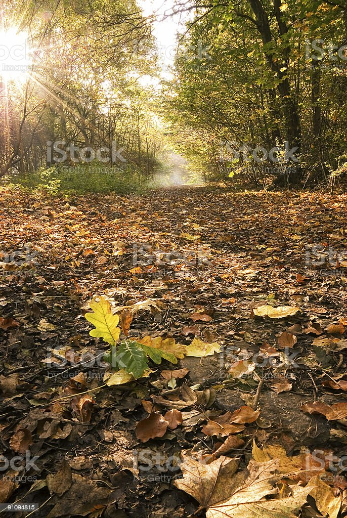 Autumnal Woods royalty-free stock photo