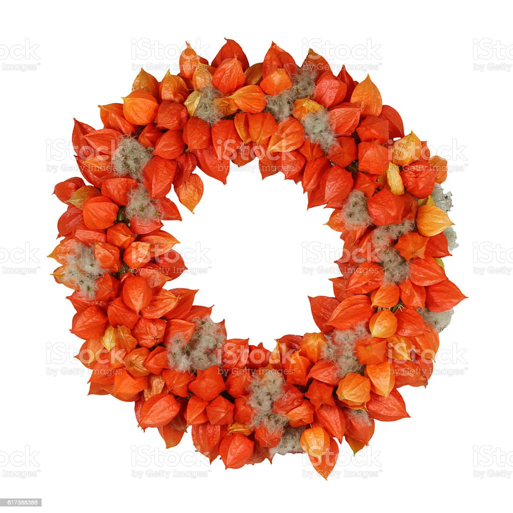 Autumnal Wreath with Physalis and Withywind (Physalis alkekengi and Clematis vitalba) – Foto