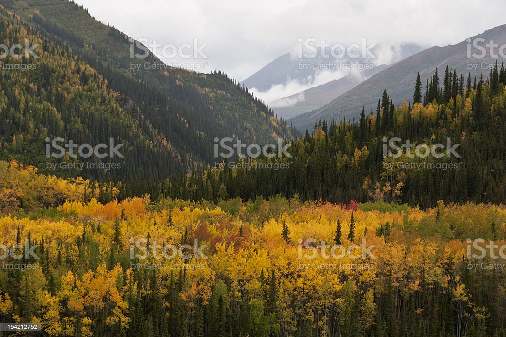 AutumnColor stock photo