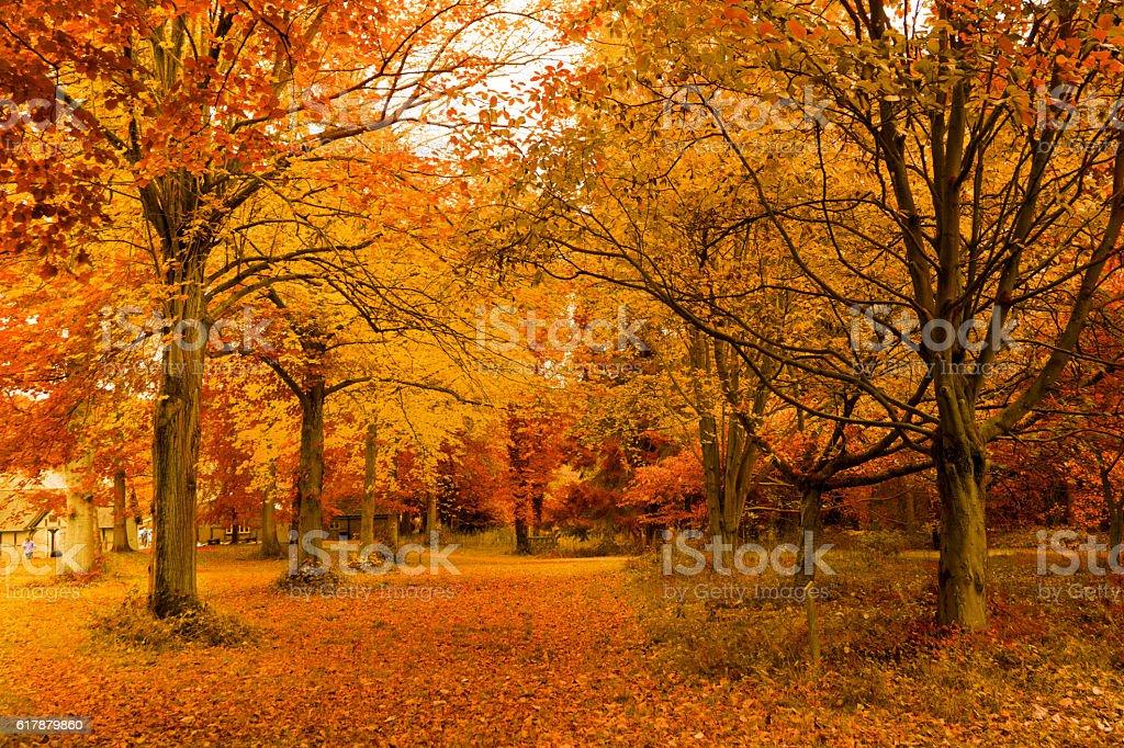 autumn,golden autumn trees stock photo