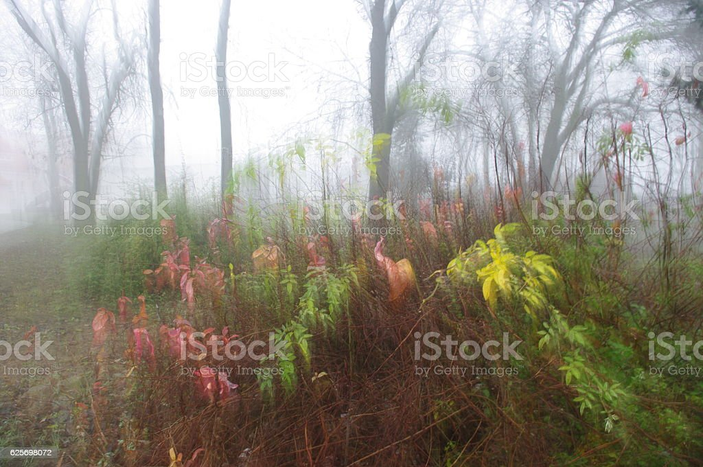 autumn-impression stock photo