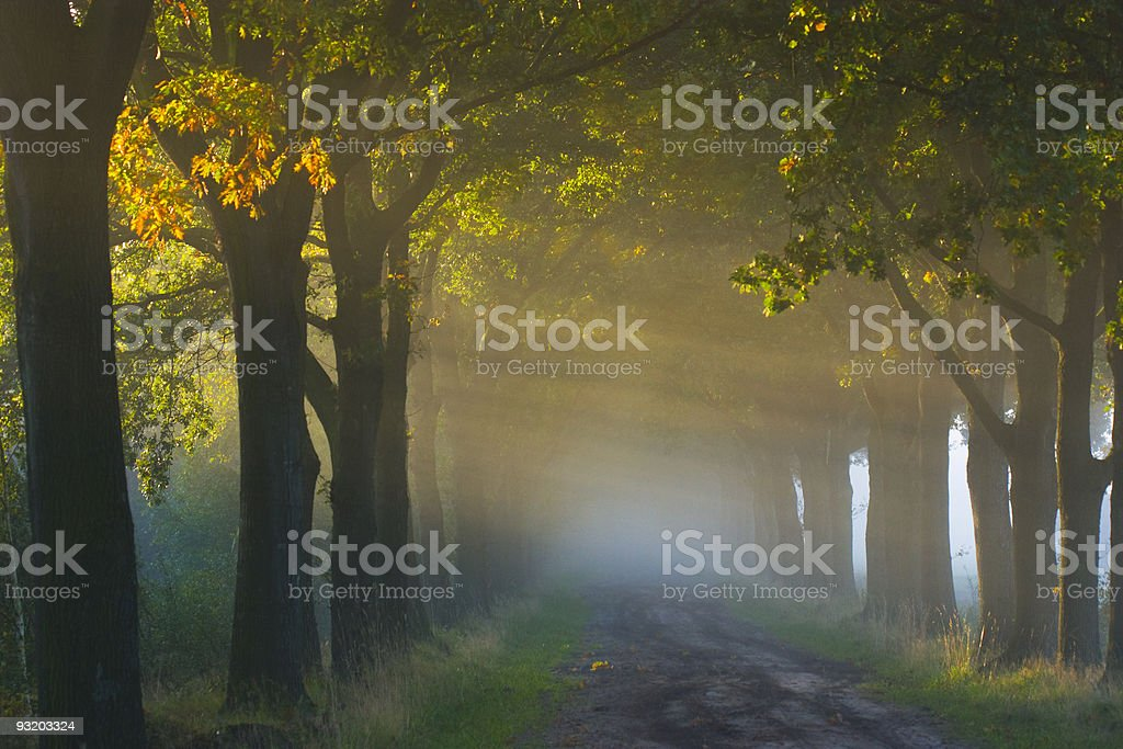 Autumnleaves royalty-free stock photo