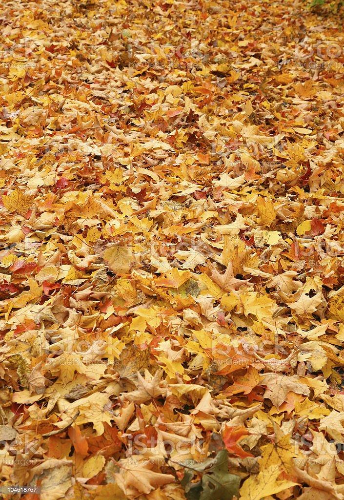 Autumn's Beautiful Colors stock photo
