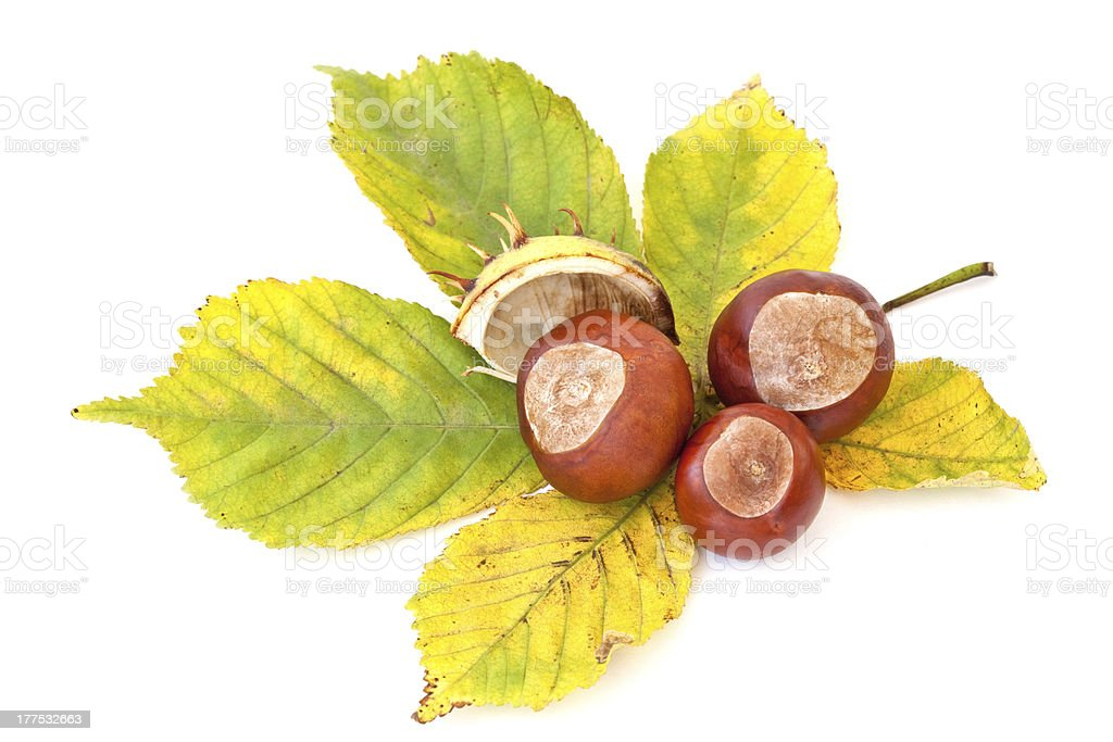 Autumn's chestnuts stock photo