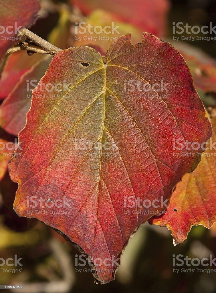 Autumn's Glory stock photo